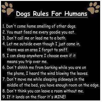 Notice showing dogs' rules for humans